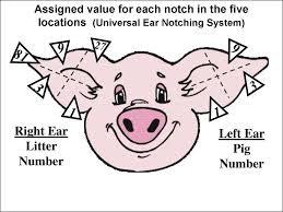 Method of Identification of animals