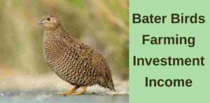 Bater Bird