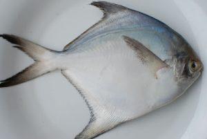 Pomfret fish health benefits