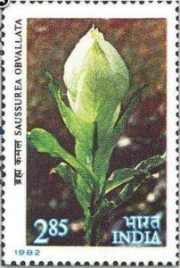 Postal Stamp Of Brahma Kamal