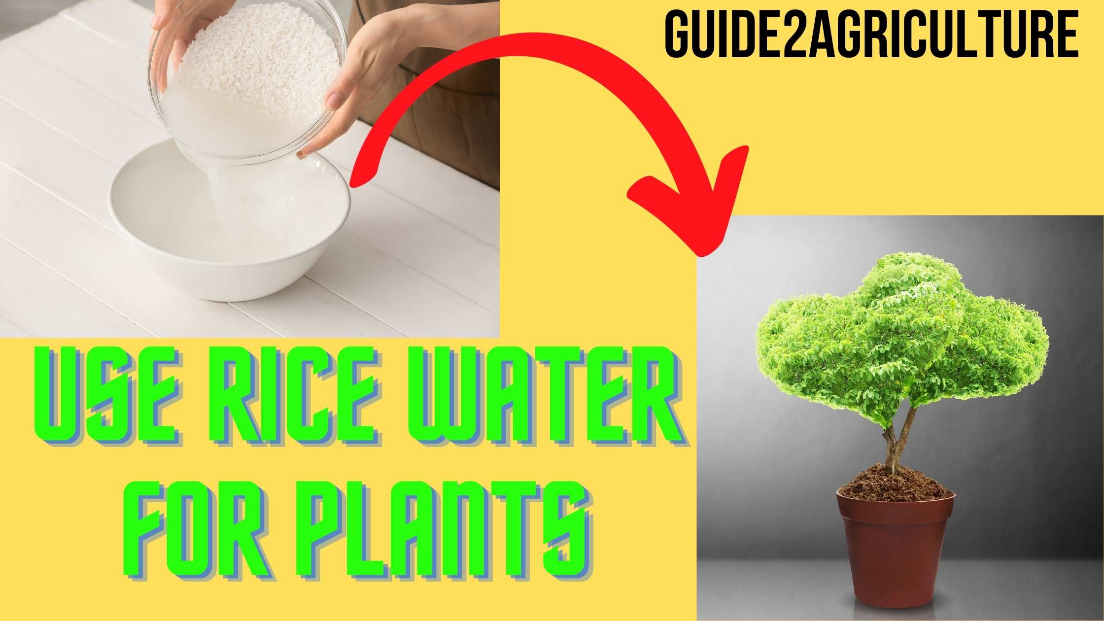 Rice Water For Plants
