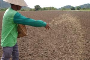 Seed sowing: Broadcasting Method