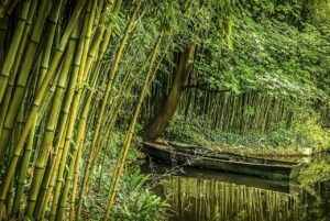 Bamboo: Monocot Plant