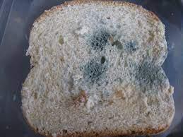 Bread Mould: Non green plants