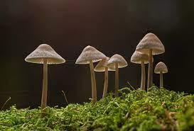 Mushroom: Non green plant