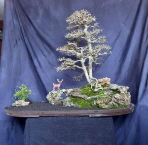 Kalyos Fruit Tree Bonsai