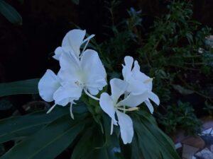 Sontakka Plant Care