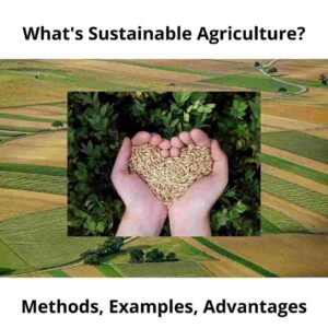 What's Sustainable Agriculture