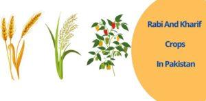 Rabi and Kharif crops in Pakistan