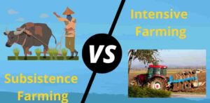 Distinguish Between Subsistence Farming And Intensive Farming