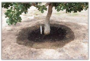 Ring Basin Irrigation